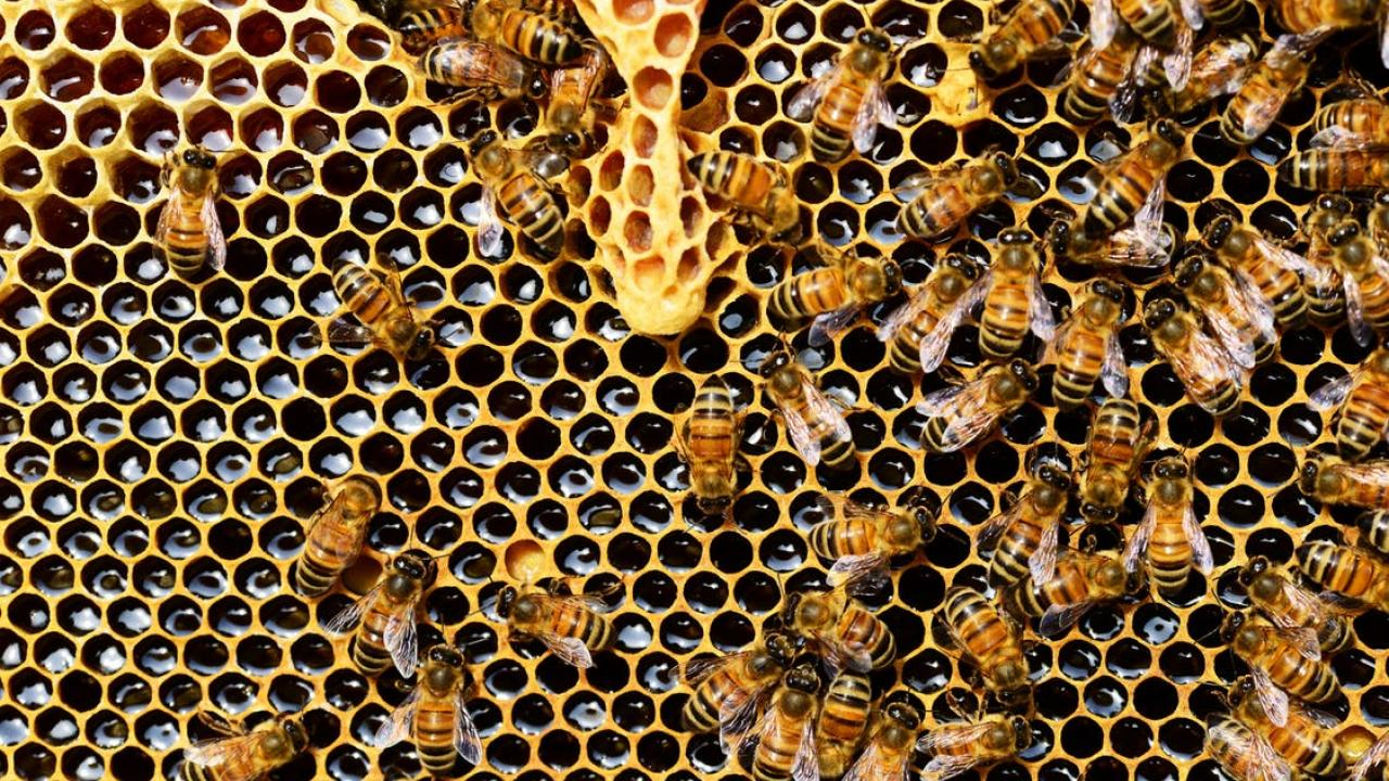 Honey: Intrinsically Non-GMO | UC Davis Honey and