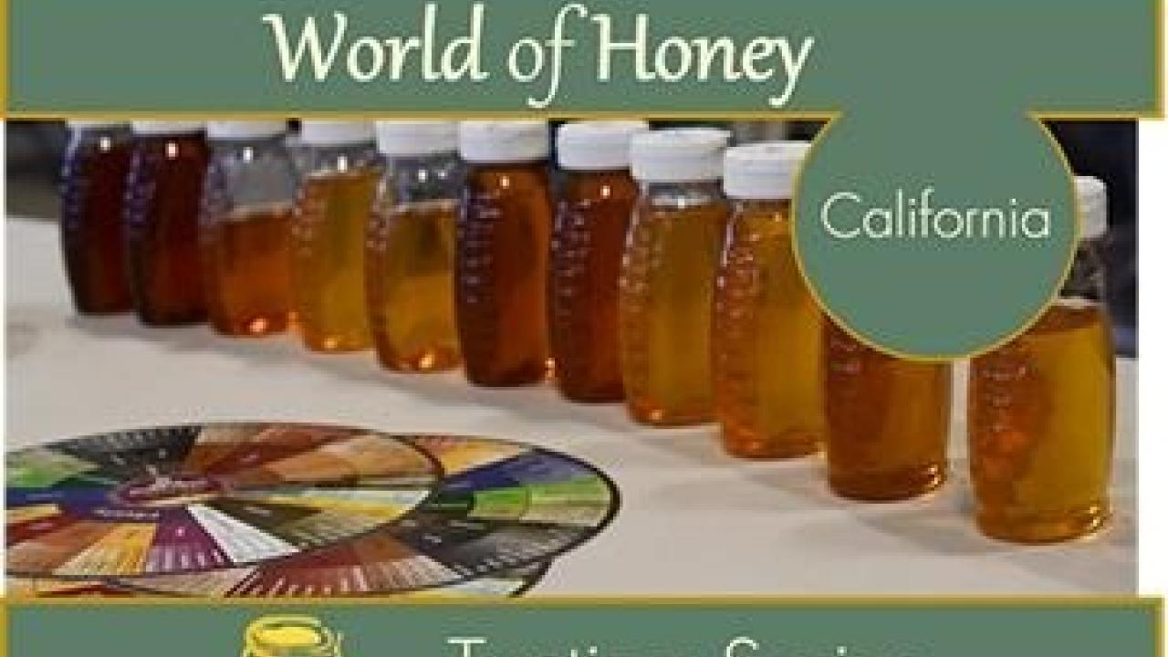 world honey